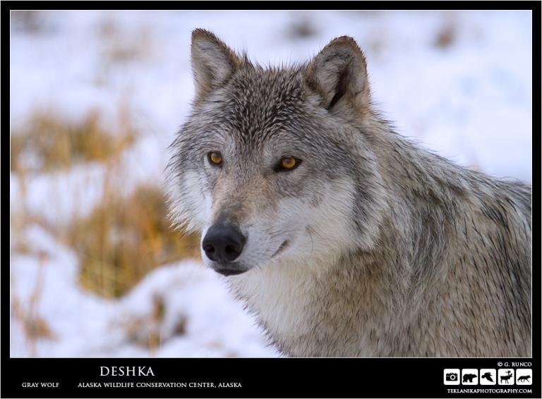 Deshka