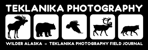 Wilder Alaska – Teklanika Photography Field Journal